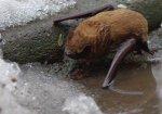 В Одессе прошел дождь из летучих мышей