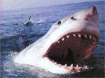 На популярные египетские курорты вернулись агрессивные акулы